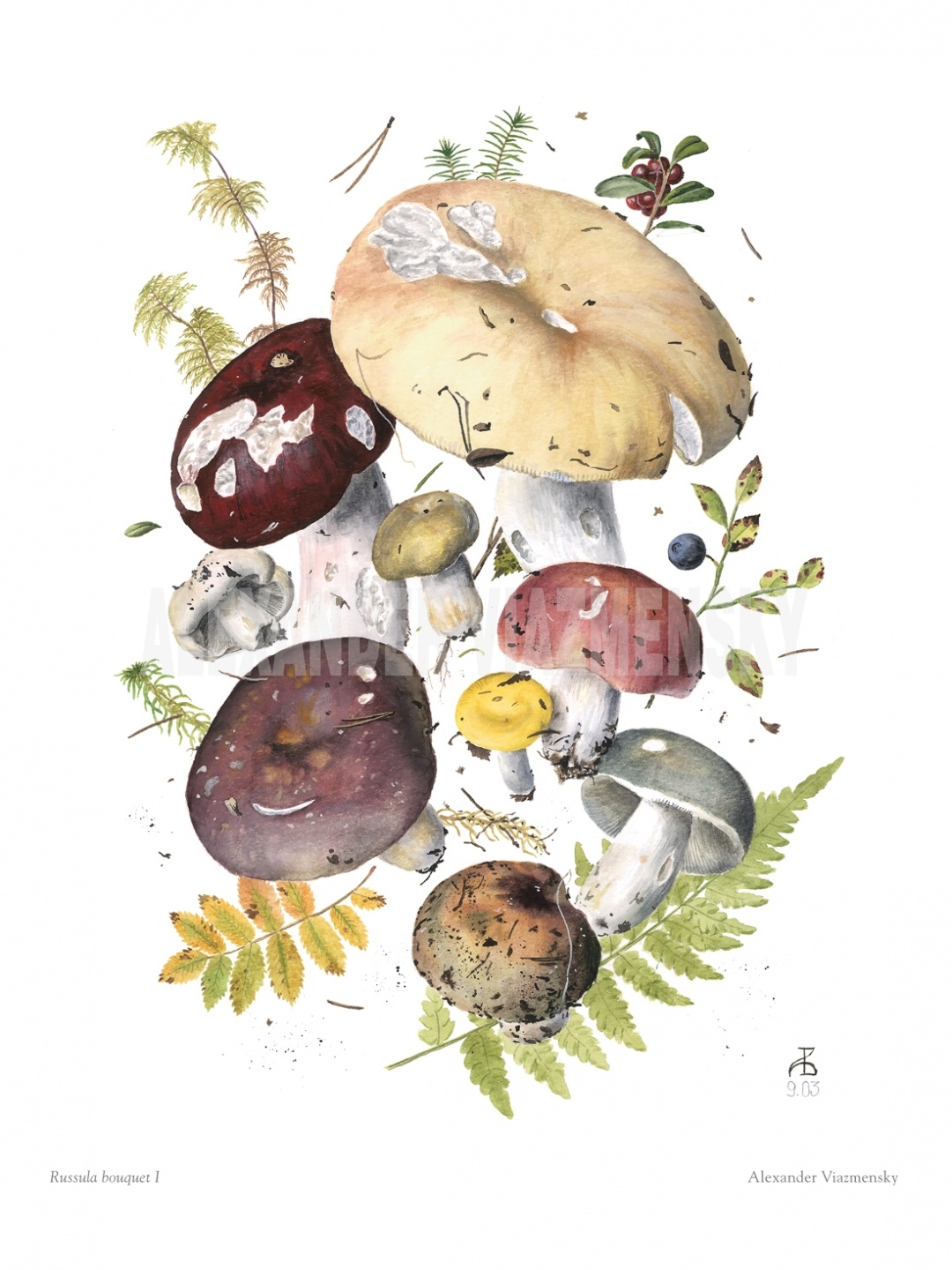 Russula Bouquet I